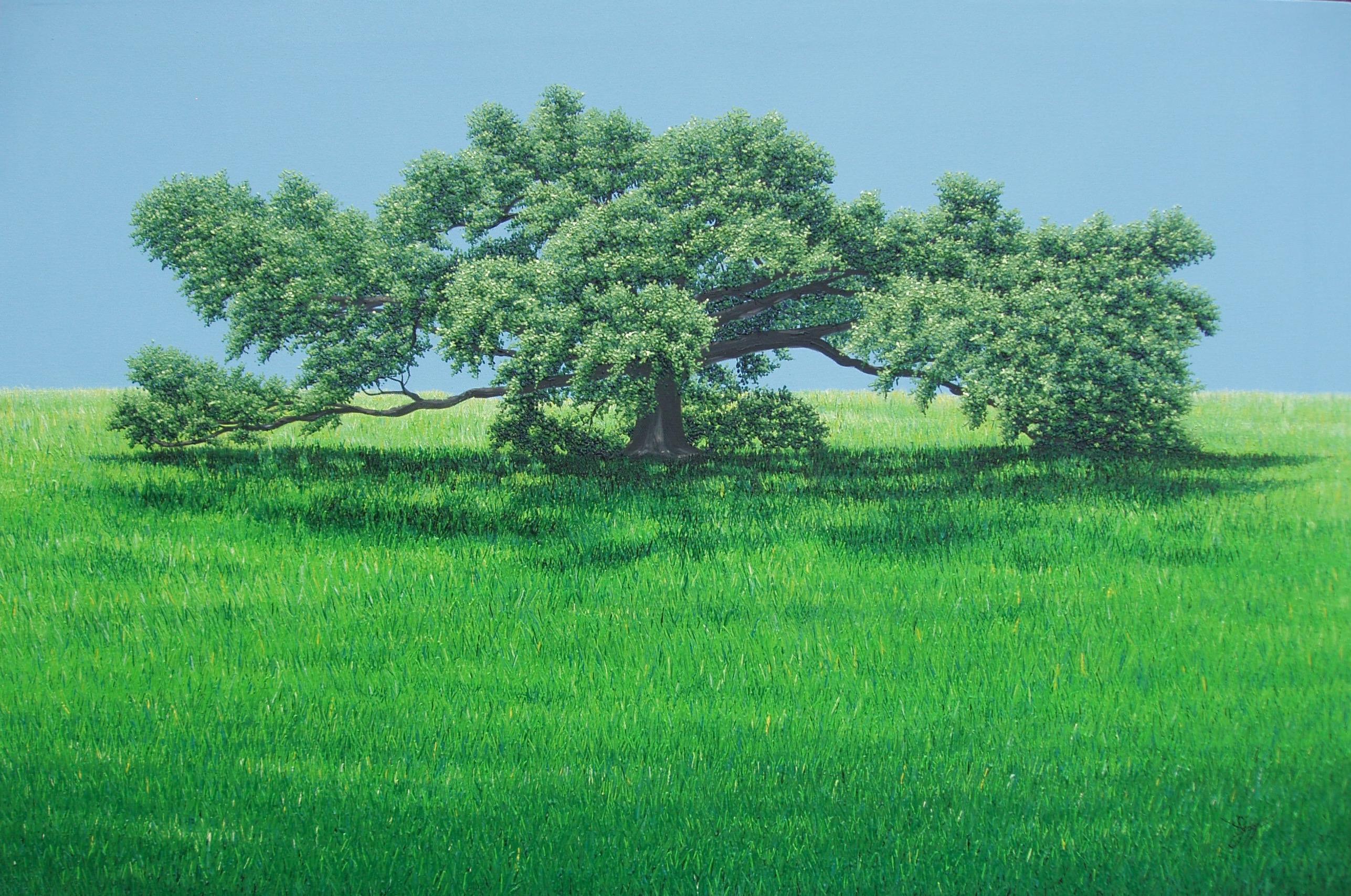 original oil paintings                live oak trees